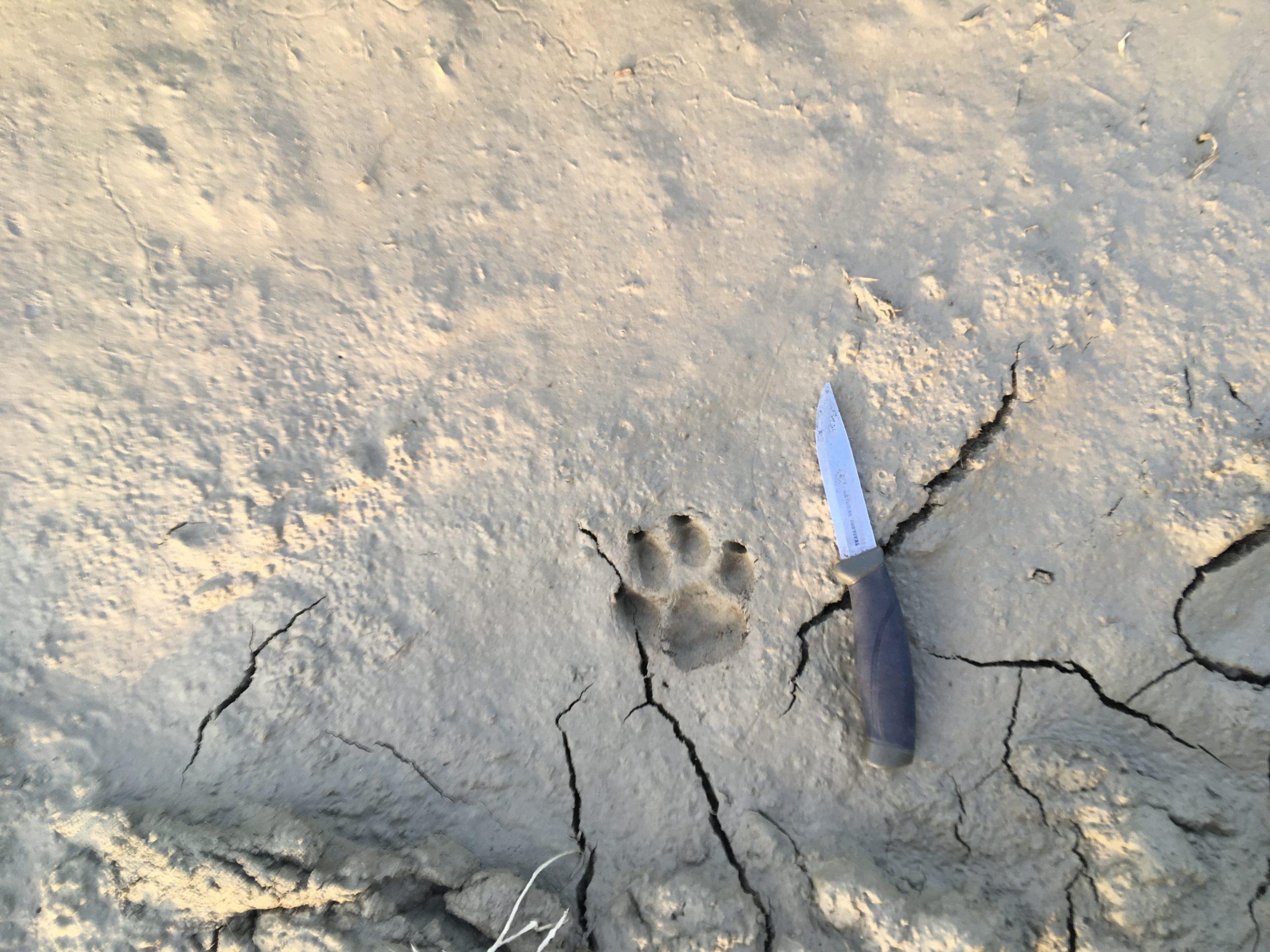 Safari in Umbria - Marco Priori Natural Survival (5)